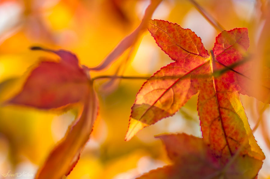 Autumn you warm my heart ... by Sweet-Nature
