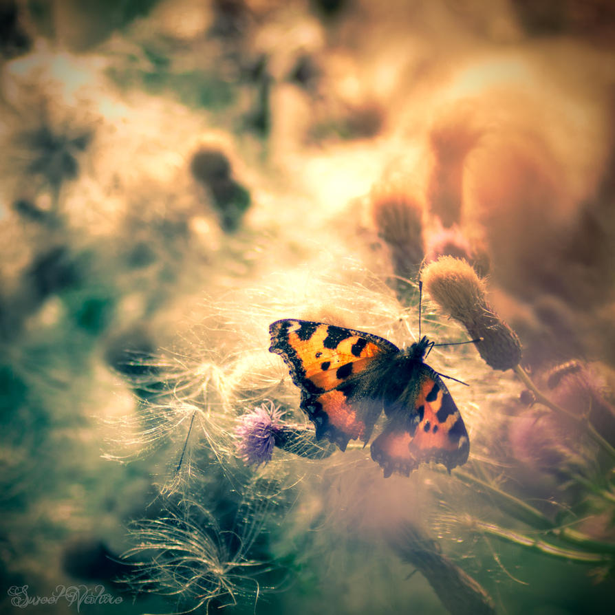 Butterfly Dreamer by Sweet-Nature