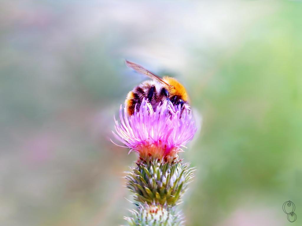 Bee by Olga17