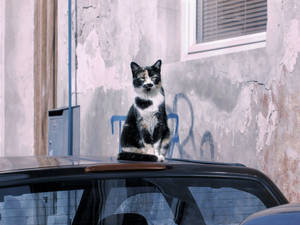 City cat by Olga17