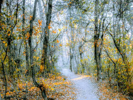 Autumnal vibrance by Olga17