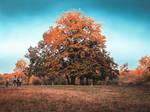 Red tree by Olga17