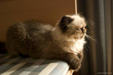 flaffi kat