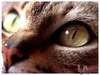 Pretty Eyes by LADESIGNER