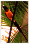 Little Bird by LADESIGNER