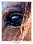 Wild Horse by LADESIGNER