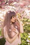 Spring Cherry Blossom 01
