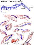 Wings Study - Skeleton
