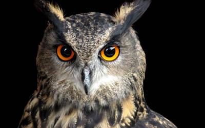 Uhu - Eagle Owl by antragonDE