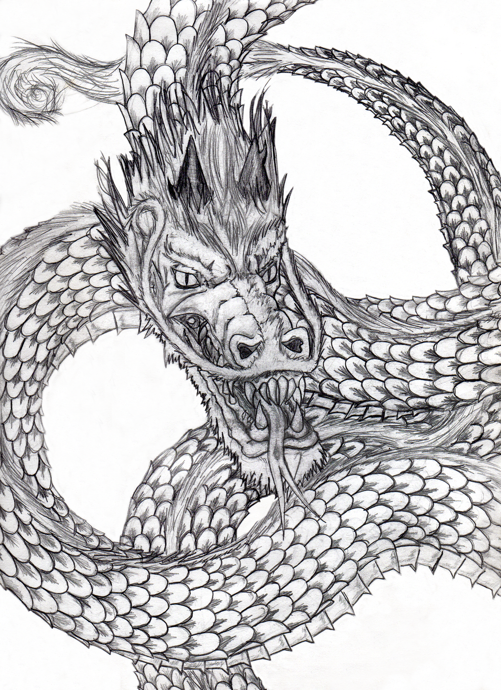 Chinese Dragon Tattoo Drawings