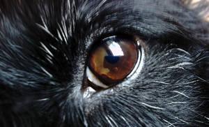 My Dog's eye