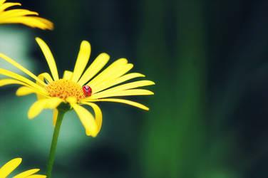 the little ladybird