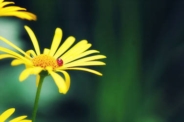 the little ladybird by Kiho-chan