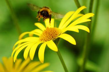 buzz, buzz, buzz by Kiho-chan