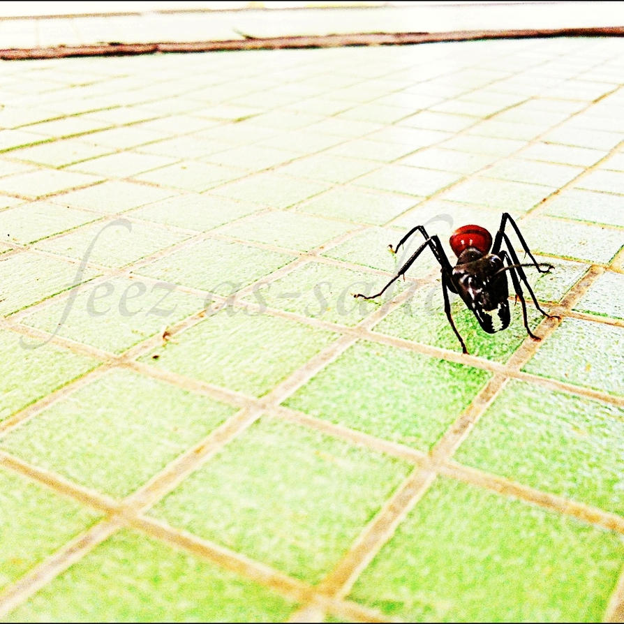 Bull Ant by CatastroPheez