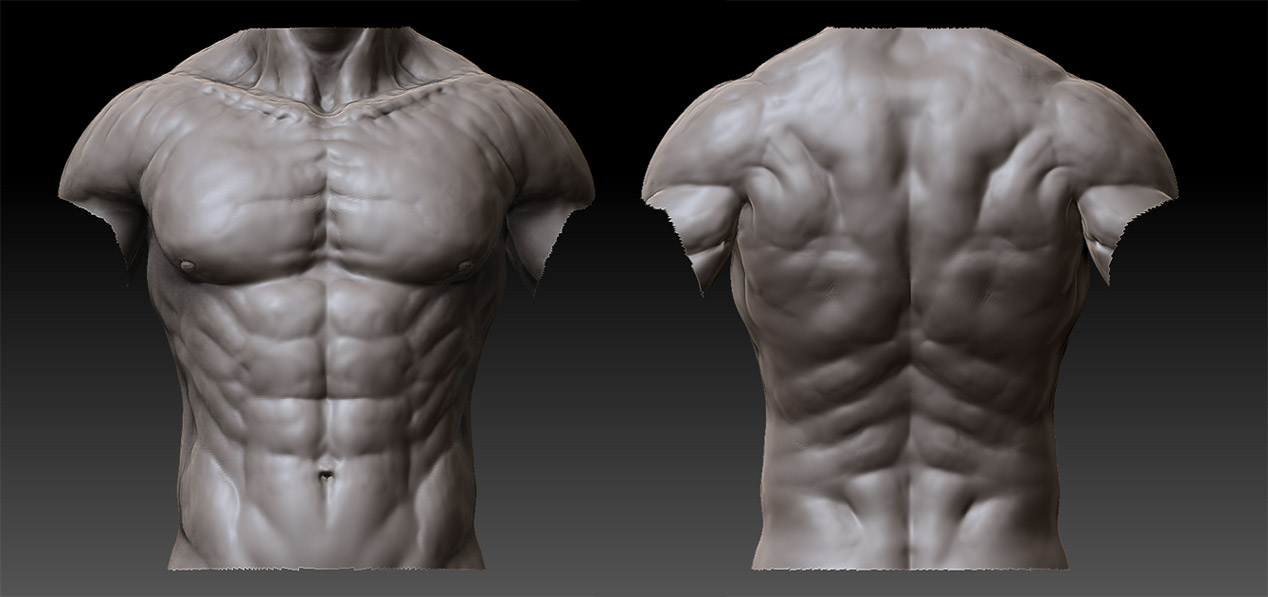 Male Anatomy - 02 by shoaibMalik on DeviantArt