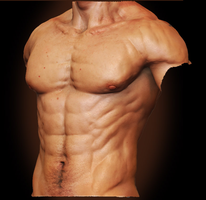 Male Anatomy - Front 02 by shoaibMalik on DeviantArt