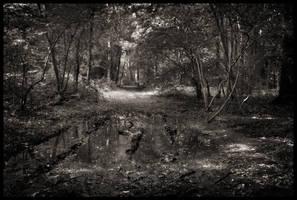 Woodland III by grimleyfiendish