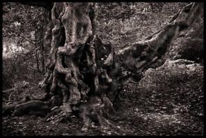Twisted Birch by grimleyfiendish