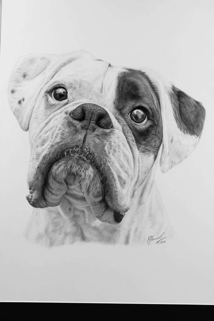 Minty the Boxer by grimleyfiendish