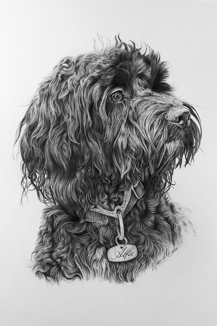 Alfie by grimleyfiendish