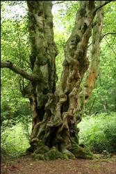 Gnarly Tree by grimleyfiendish