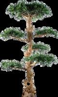 Tree 001 - Clear Cut