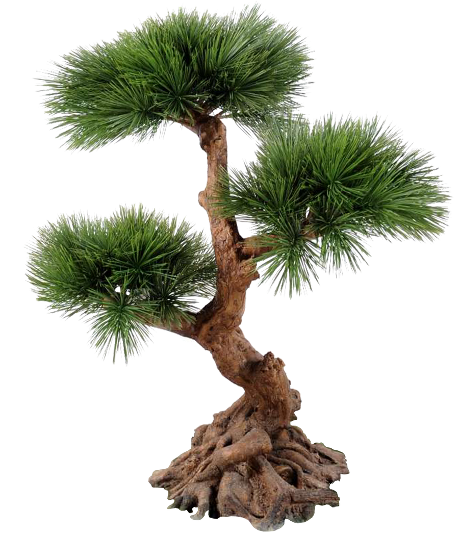 Plant Roots 001 - Clear Cut PNG by Travail-de-lame on DeviantArt for Plant Transparent Png  104xkb