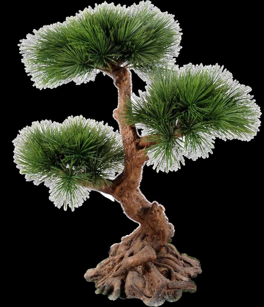 Tree 002 - Clear Cut