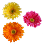 Flower 001 - Clear Cut PNG