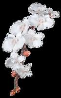 Flower 007 - Clear Cut PNG by Travail-de-lame
