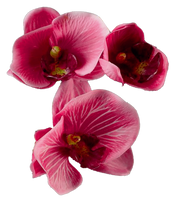 Flower 008 - Clear Cut PNG by Travail-de-lame
