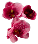Flower 008 - Clear Cut PNG