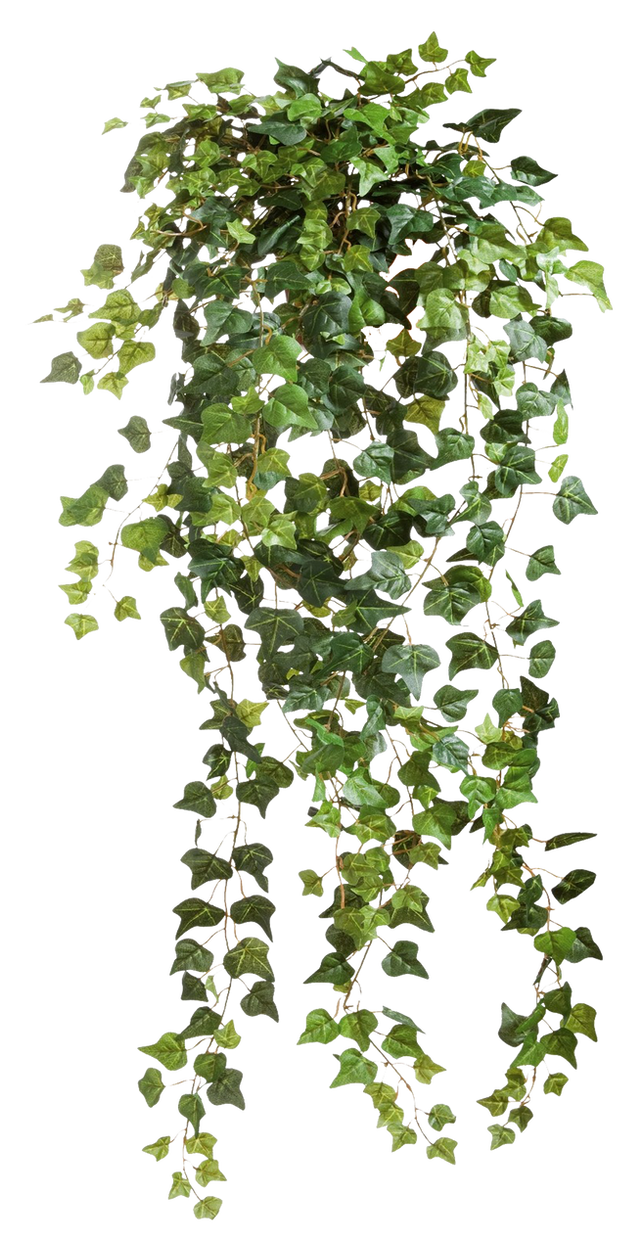 Ivy 40 - Clear Cut PNG by Travail-de-lame on DeviantArt - Plant De Travail