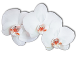 Flower 009 - Clear Cut PNG