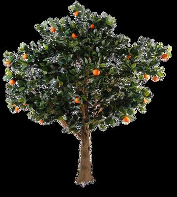 Tree 003 - Clear Cut PNG