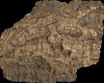 Phellem [Cork] Bark 004 - Clear Cut