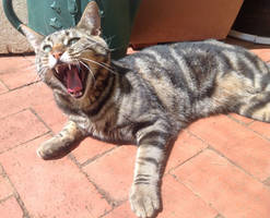 Yawning Kitty by Jade-the-Kitsune