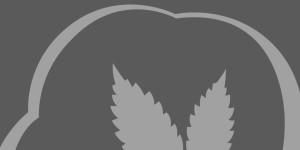 420-URL-Shortener's Profile Picture