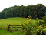 Stock 0014 - Meadow 01