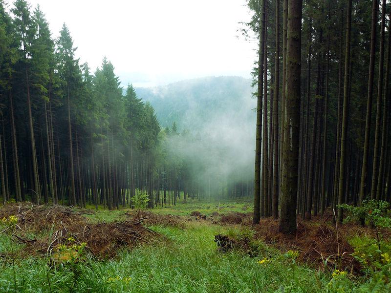 Stock 0015 - Misty hill by Niverdia-stock
