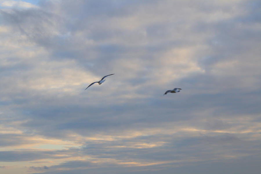 2 Seagulls by RachelDS