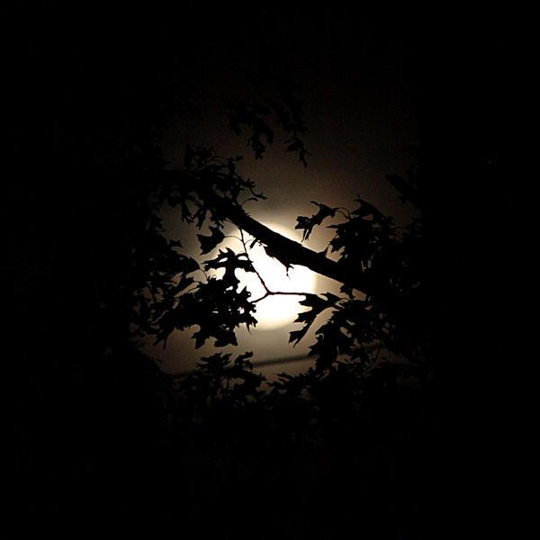 Full Moon July 3, 2012 by RachelDS