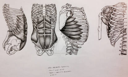 Abs/Obliques/Serratus Front and Side Views by BillyDoubleU