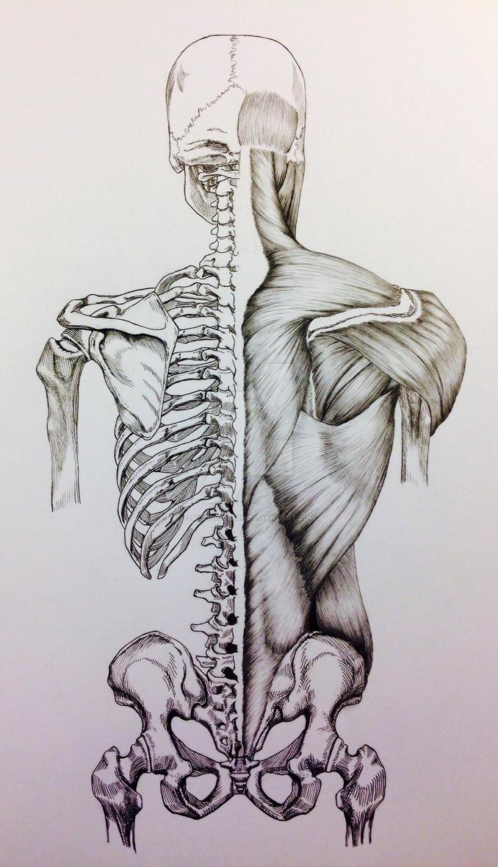 Skull to Pelvis Back Bones/Muscles by BillyDoubleU