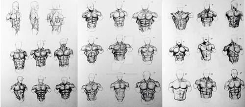 24 Torsos Surface Anatomy Figures Front View by BillyDoubleU