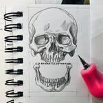 Skull  by 3SticksIllustration