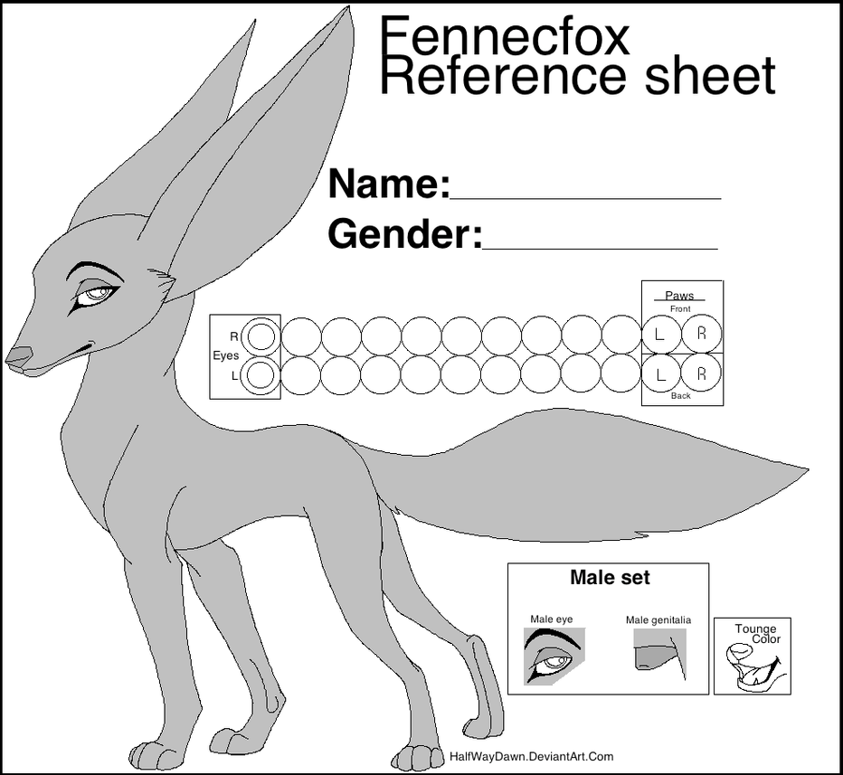 free fennec fox reference sheet by littlepuffin on deviantart