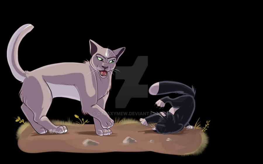 Warrior Cats Violetpaw