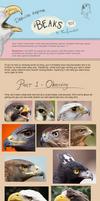 Raptor Beaks Tutorial by Foxofwonders